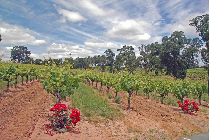 Wijngaard en wolken royalty-vrije stock afbeeldingen