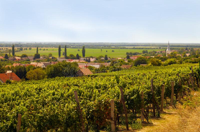 Wijngaard Landschap van zuidelijk Europa met klein dorp, chur stock foto