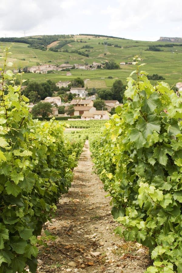 Wijngaard met mening over het dorp van Bourgondië royalty-vrije stock foto's