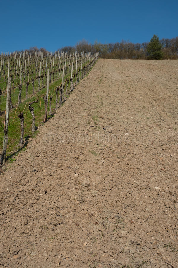 Wijngaard met ontruimd pakket van land en grond stock foto's