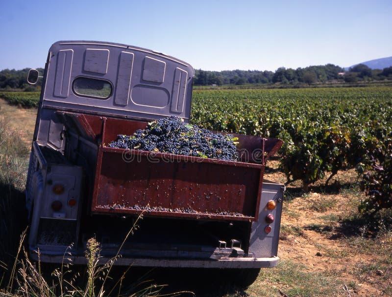 Wijngaard met oude Franse vrachtwagen stock foto's