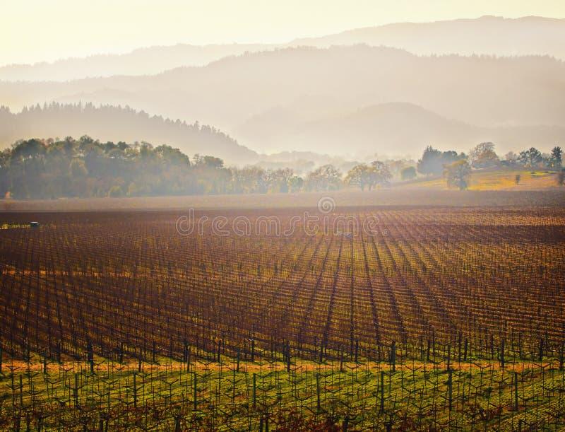 Wijngaard, Napa Vallei, Californië stock afbeeldingen