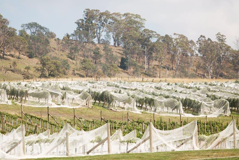 Wijngaard noordelijk Tasmanige royalty-vrije stock afbeelding