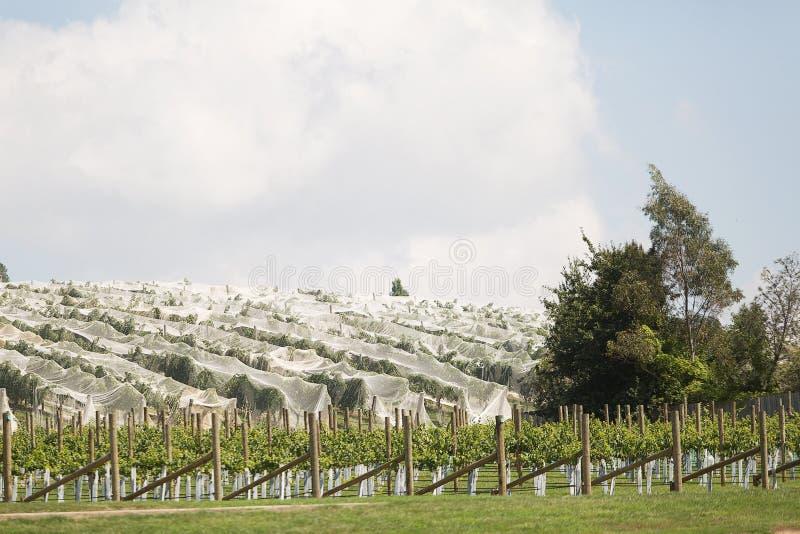 Wijngaard noordelijk Tasmanige royalty-vrije stock fotografie