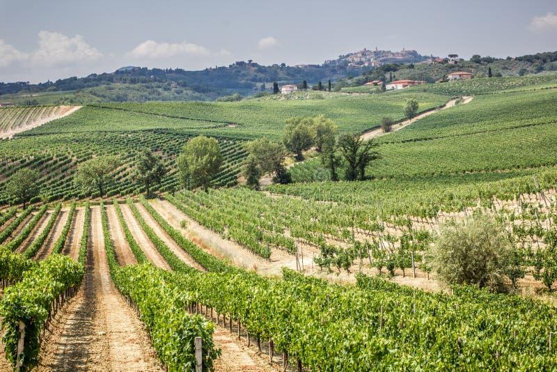 Wijngaard op het gebied van productie van Vino Nobile, Montepulciano, Italië stock foto
