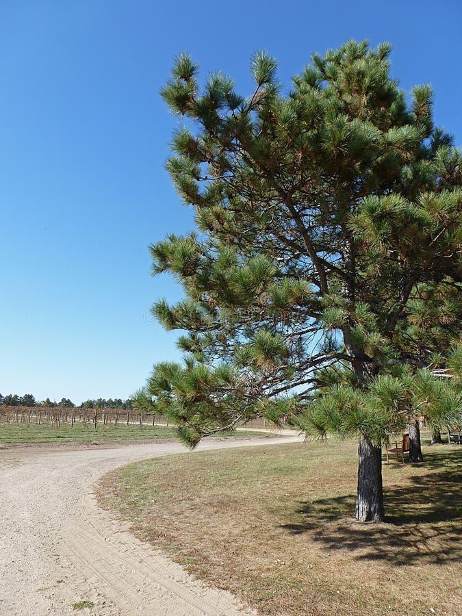 Wijngaard in platteland royalty-vrije stock afbeelding