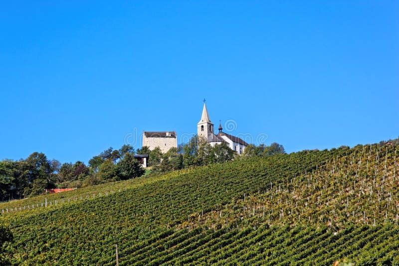 Wijngaard in Sierre, Valais, Zwitserland stock foto