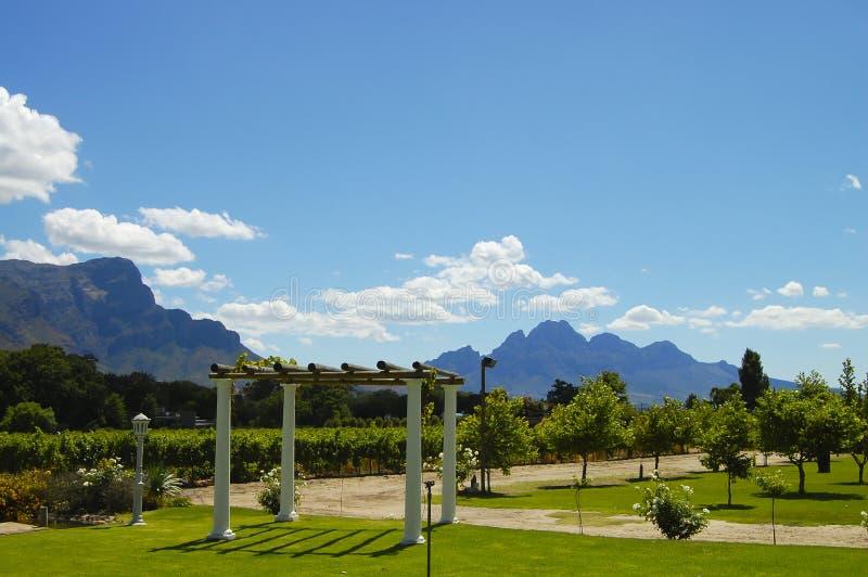 Wijngaard - Stellenbosch - Zuid-Afrika royalty-vrije stock foto