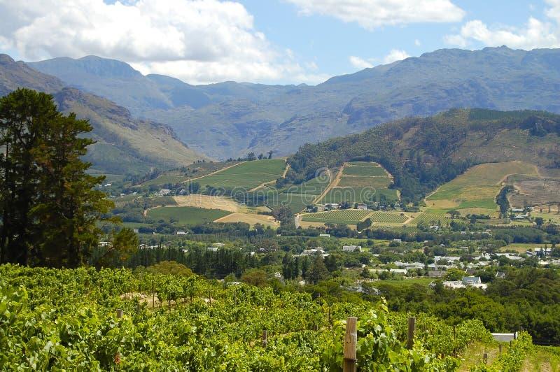 Wijngaard - Stellenbosch - Zuid-Afrika stock afbeelding