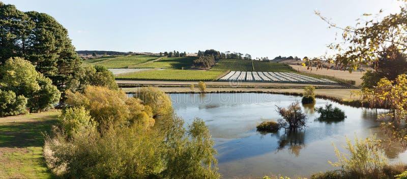 Wijngaard Tasmanige stock fotografie