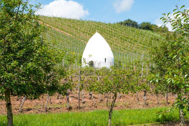 Wijngaard tijdens autum in Rijn-Hesse, Rheingau, Duitsland stock foto's