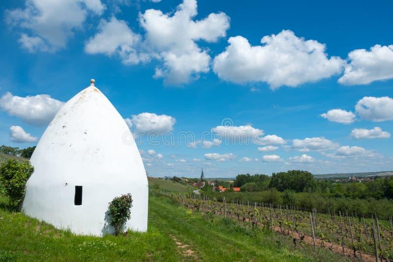 Wijngaard tijdens autum in Rijn-Hesse, Rheingau, Duitsland stock afbeeldingen