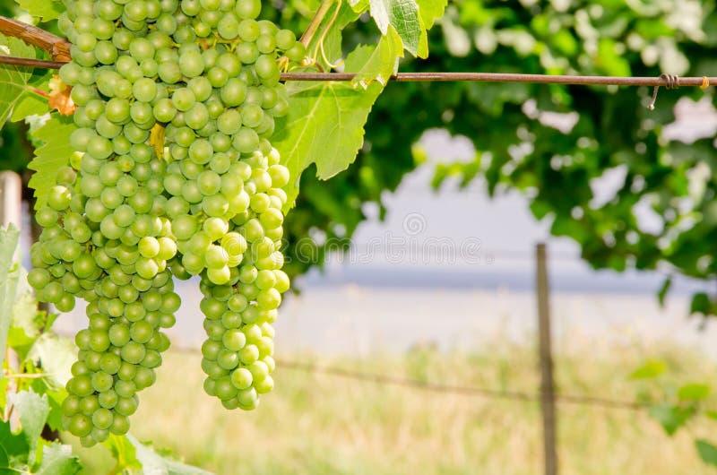 Wijngaard voor Meer stock foto's