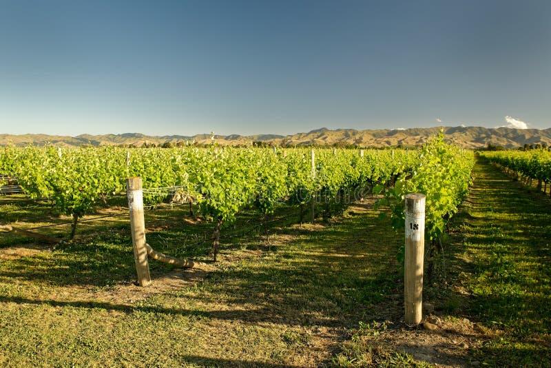 Wijngaard, wijnmakerij Nieuw Zeeland, typisch Marlborough-landschap met wijngaarden en wegen, heuvels en bergen stock afbeelding