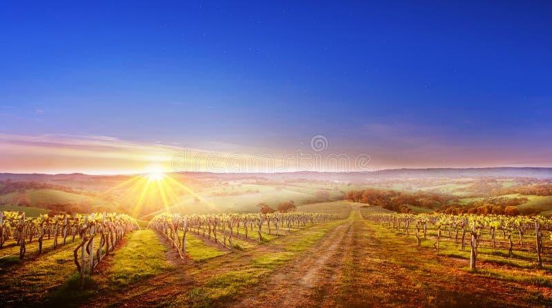 Wijngaard in Zuid-Australië royalty-vrije stock afbeeldingen