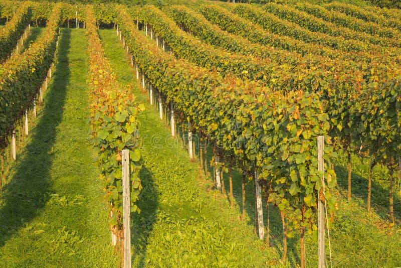Wijngaard zuidelijk Duitsland, bergweg, heppenheim, bensheim royalty-vrije stock afbeelding