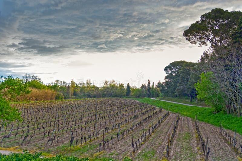 Wijngaard in zuidelijk Frankrijk royalty-vrije stock afbeeldingen