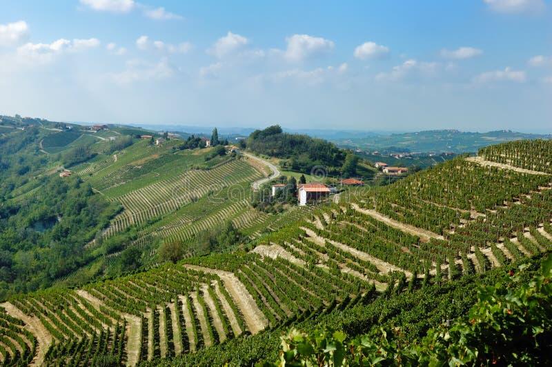Wijngaarden royalty-vrije stock afbeelding