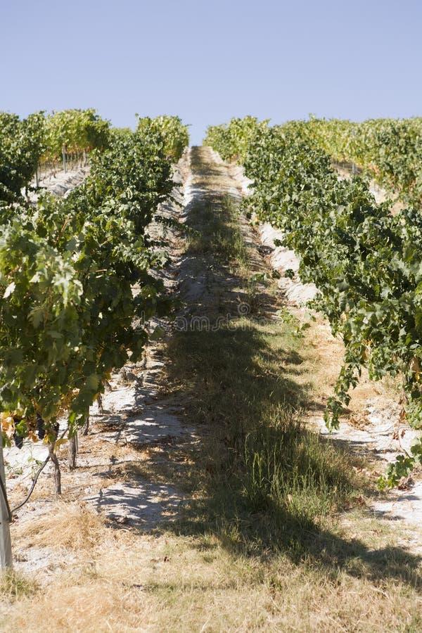 Wijngaarden royalty-vrije stock fotografie