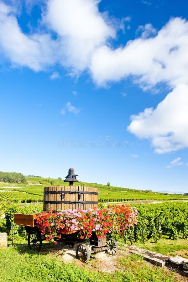 Wijngaarden, Bourgondië, Frankrijk stock foto
