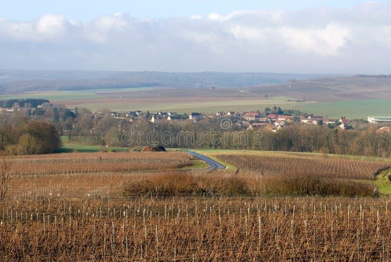 Wijngaarden, Champagne, Frankrijk royalty-vrije stock afbeelding
