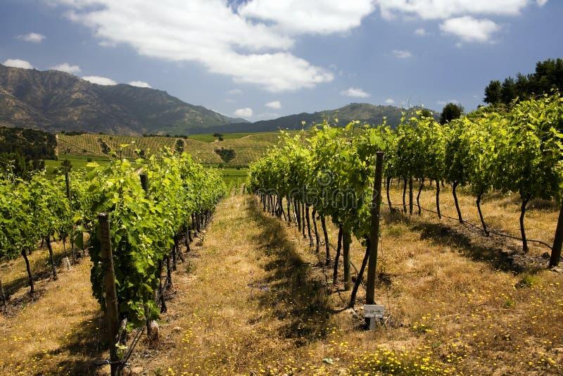 Wijngaarden - Chili royalty-vrije stock afbeeldingen