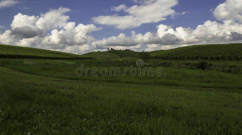 Wijngaarden, Daruvar, Kroatië stock foto's