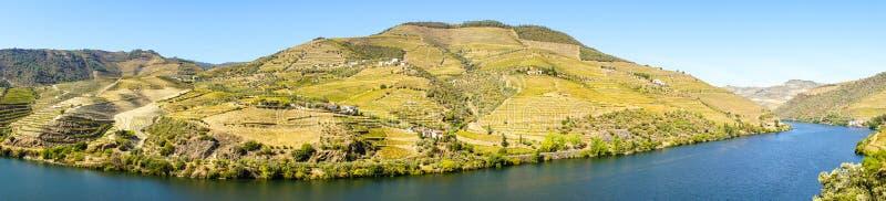 Wijngaarden in de berg stock afbeeldingen