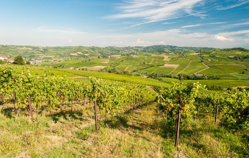 Wijngaarden in de heuvels van Oltrepo& x27; Pavese, dichtbij Pavia royalty-vrije stock foto