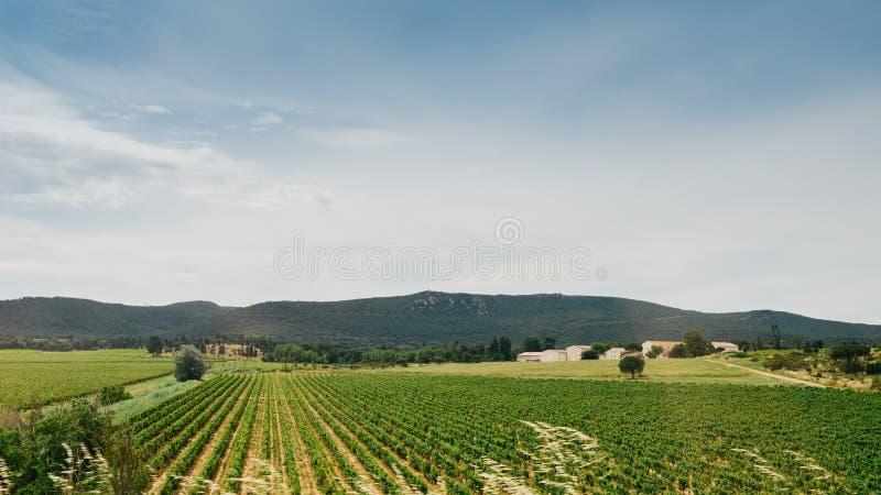 Wijngaarden in de Provence in het Zuiden van Frankrijk royalty-vrije stock foto