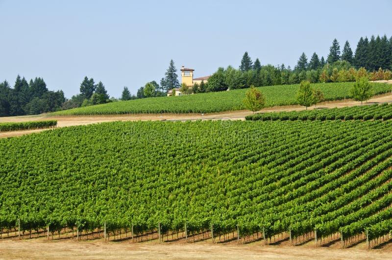 Wijngaarden in de Willamette Vallei Oregon stock afbeelding