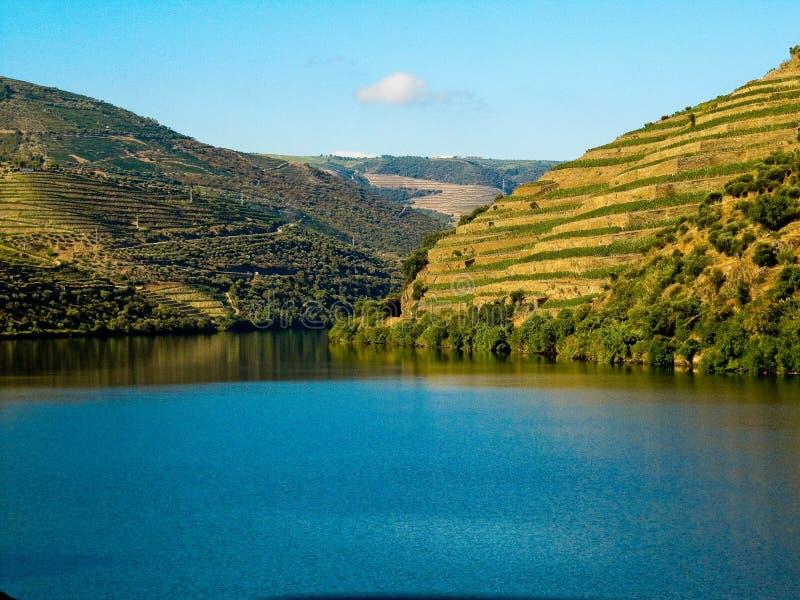 Wijngaarden door dourorivier porto stock fotografie
