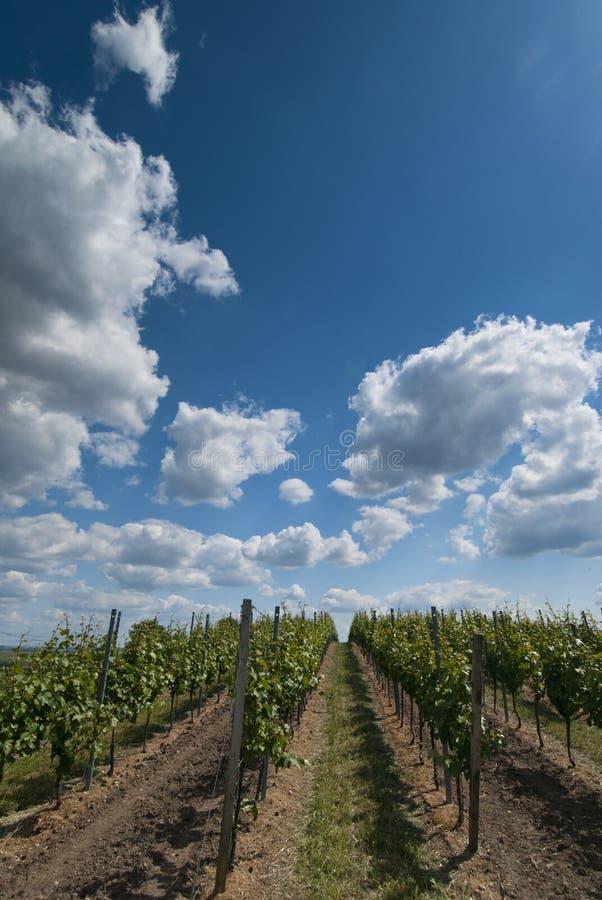 Wijngaarden in Duitsland stock foto's