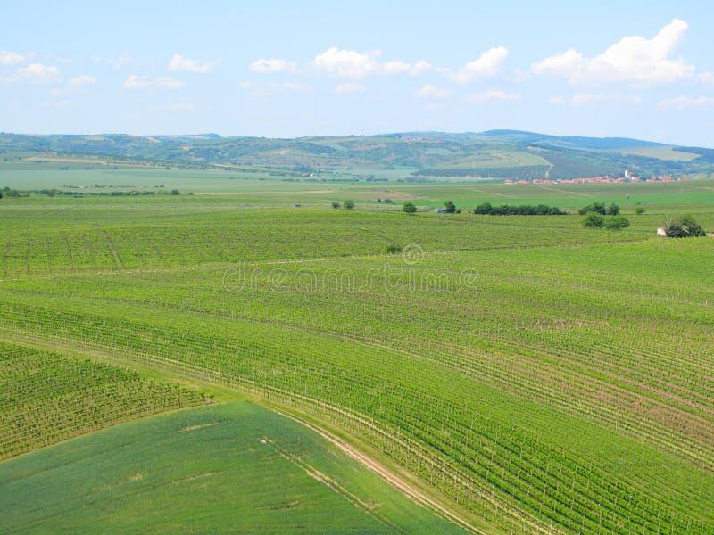 Wijngaarden en gebieden in Zuid-Moravië royalty-vrije stock foto's