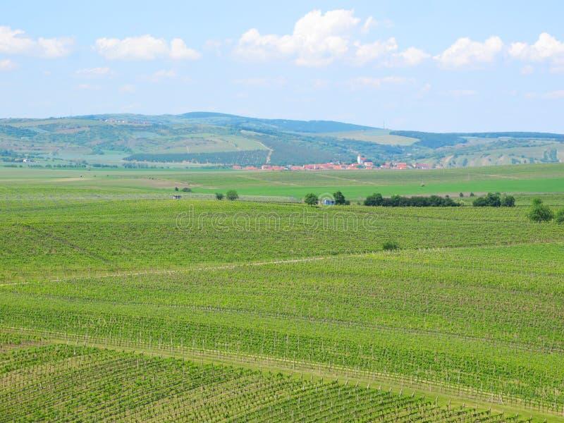 Wijngaarden en gebieden in Zuid-Moravië royalty-vrije stock foto