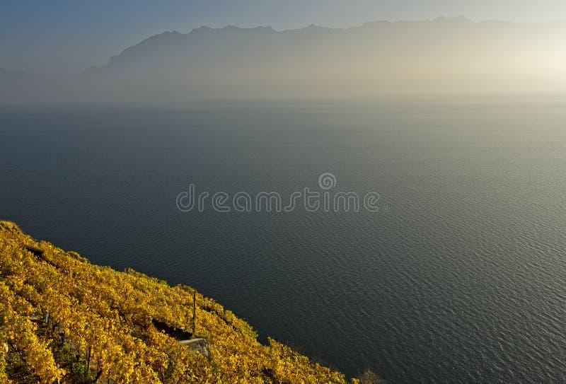 Wijngaarden in gouden de herfstgebladerte die boven Meer Genève toenemen stock afbeeldingen