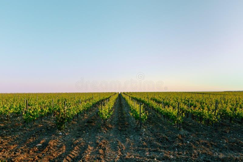 Wijngaarden in het de industrieconcept van de de zomerwijn stock afbeeldingen