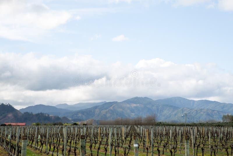 Wijngaarden in het Marlborough-gebied in Nieuw Zeeland stock foto