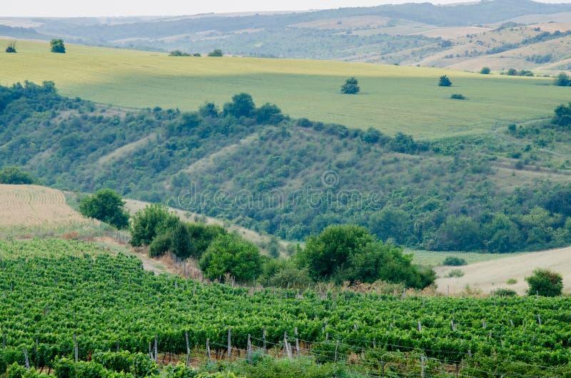 Wijngaarden langs de rivier van Donau in Noordoostelijk Bulgarije stock foto's