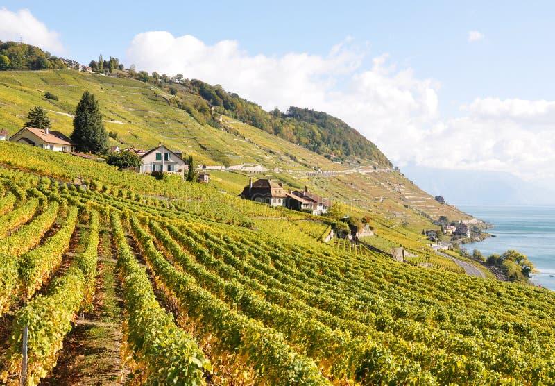Wijngaarden in Lavaux stock afbeeldingen