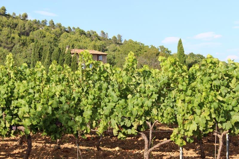 Wijngaarden in Le Val, de Provence, Frankrijk royalty-vrije stock foto's