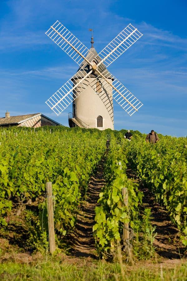 wijngaarden met windmolen dichtbij Chénas, Beaujolais, Bourgondië, Frank stock foto