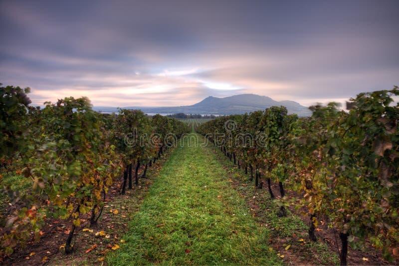 Wijngaarden in Moravië royalty-vrije stock foto