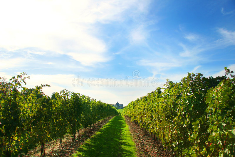 Wijngaarden in Niagara royalty-vrije stock afbeeldingen