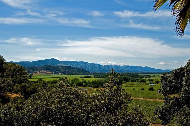 Wijngaarden in Noordelijk Californië royalty-vrije stock afbeeldingen