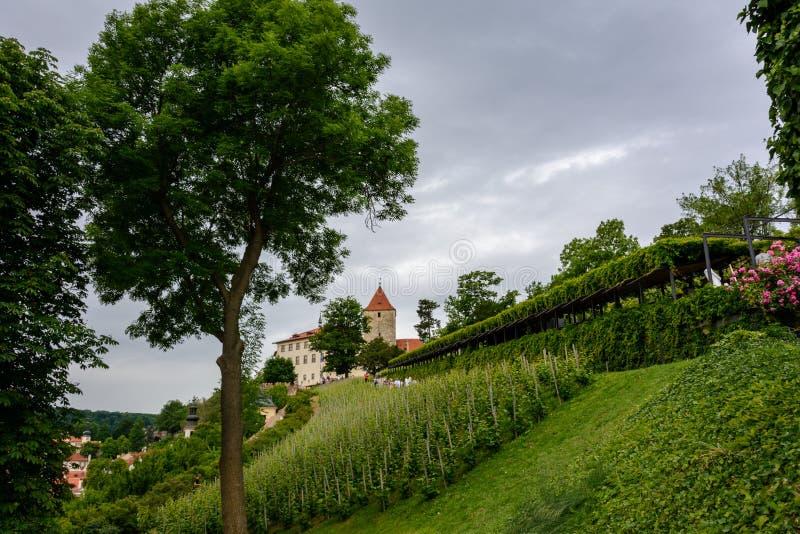 Wijngaarden op de hellingen van het Kasteel van Praag in Praag stock fotografie