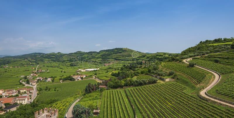 Wijngaarden op de heuvels royalty-vrije stock foto