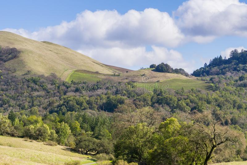 Wijngaarden op de heuvels van Sonoma-Provincie, Californië stock fotografie