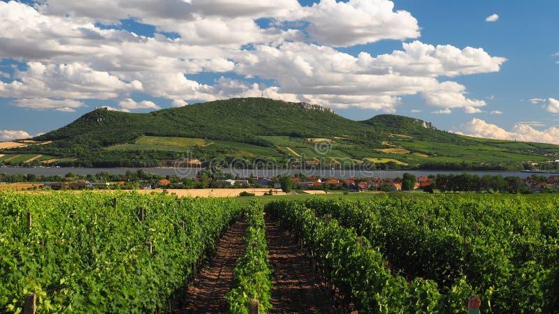 Wijngaarden Palava, Zuid-Moravië, Tsjechische republiek royalty-vrije stock foto's
