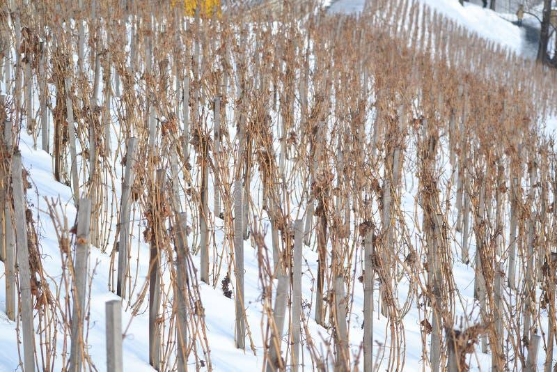 Wijngaarden in Praag van de binnenstad royalty-vrije stock afbeeldingen